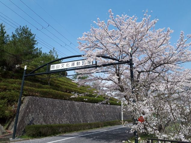 雨山文化運動公園の桜