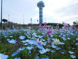 春の花物語
