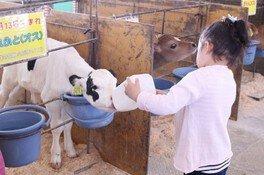 成田ゆめ牧場 牛さんの飼育係(6月)