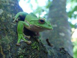 自然再生プロジェクトNo.2  モリアオガエルの住む池に戻そう!