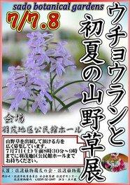 ウチョウランと初夏の山野草展(佐渡植物園企画展)