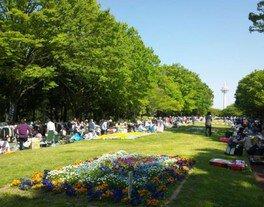 所沢市「所沢航空記念公園」フリーマーケット(7月)