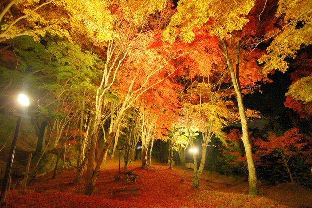 笠置山もみじ公園の紅葉