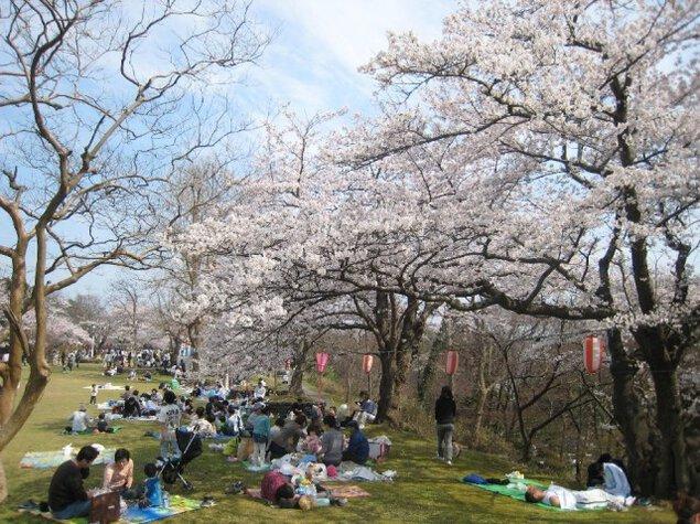 赤坂山公園 観桜会