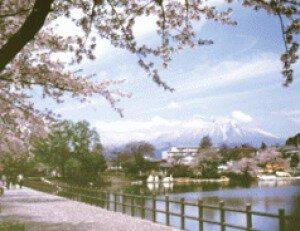 【桜・見ごろ】高松公園