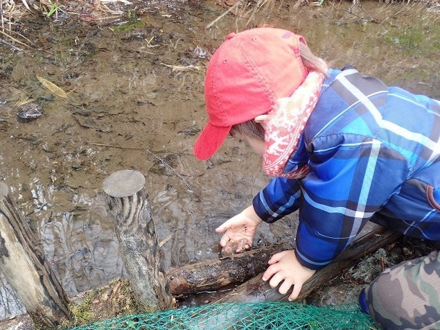 エゾアカガエルの卵を探そう!