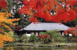 深紅に輝きを放つカエデの木が魅力だ