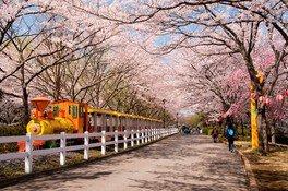 東武動物公園の桜