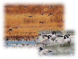 ラムサール博士になろう! ― 湿地のいきものクイズラリー ―