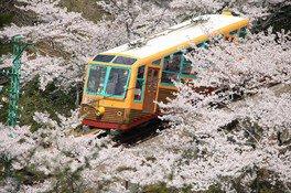 【妙見の森リフト臨時運休】妙見の森の桜