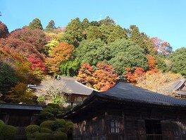 雲巌寺の紅葉