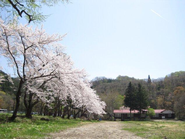 【桜・見ごろ】中滝ふるさと学舎