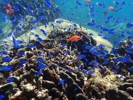 海の生き物や自然と触れ合おう!