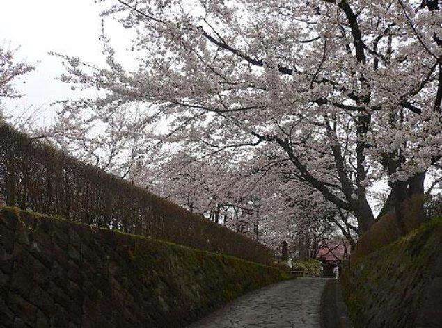 【桜・見ごろ】桜山公園(桜山護国神社)