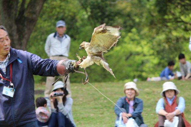 茨城県植物園 猛禽ふれあいタイム(5月)