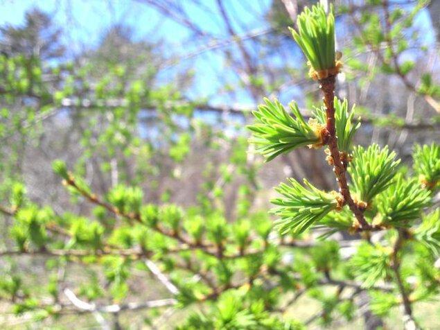 春の芽吹きを感じるハイキング