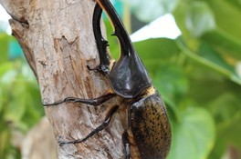 茨城県植物園 熱帯の昆虫展