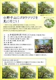 小野子山にゴヨウツツジを見に行こう!