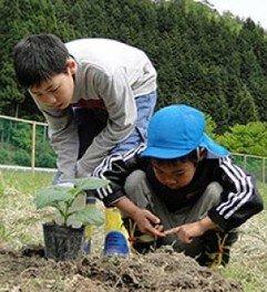野菜の苗を植えよう