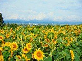 国営アルプスあづみの公園 堀金・穂高地区