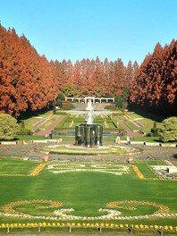 神奈川県立相模原公園 メタセコイア並木の紅葉
