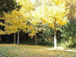 久良岐公園の紅葉