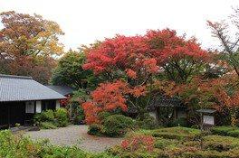 大願寺の紅葉