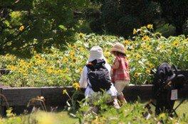 夏の花摘み園(7月)