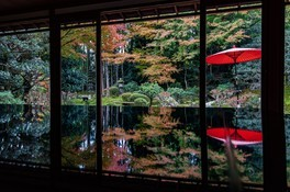 元里坊 旧竹林院庭園の紅葉