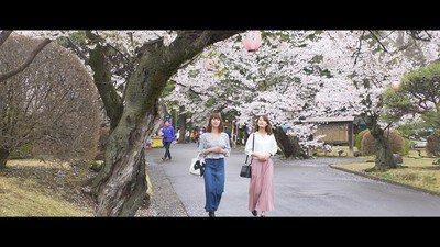 城山公園の桜(栃木県小山市)