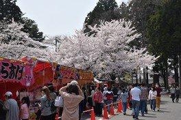 【入山禁止】三戸城跡・城山公園の桜