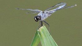 る・く・る自然観察会「夏の虫観察会」