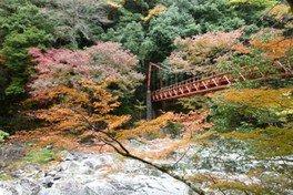 【紅葉・見ごろ】長門峡