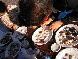 貝採集と標本づくり