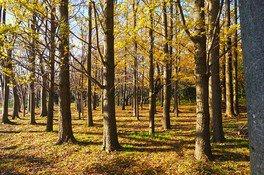根岸森林公園の紅葉