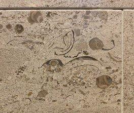 万葉文化館で見つかる化石とそのルーツ 1「化石さがし」