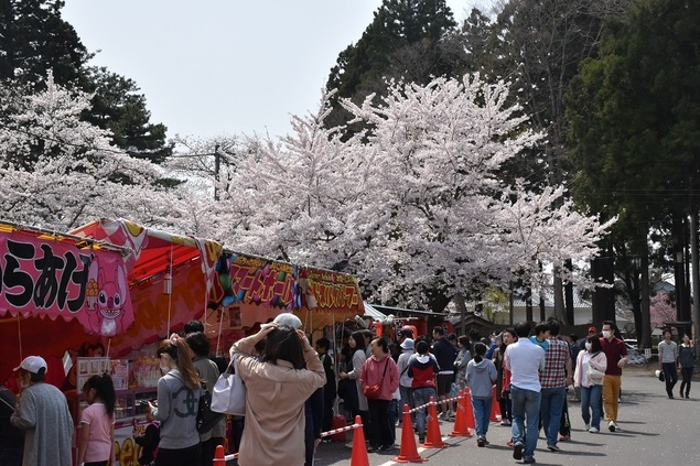 三戸城跡・城山公園の桜