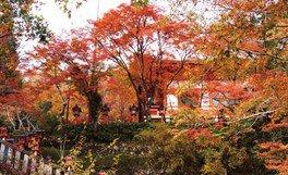 鞍馬寺の紅葉
