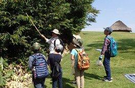 少年少女考古学教室 第2回「竪穴住居の観察とクルミ割り体験」