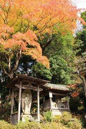 平井大師寺の紅葉