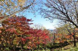 飯山白山森林公園の紅葉