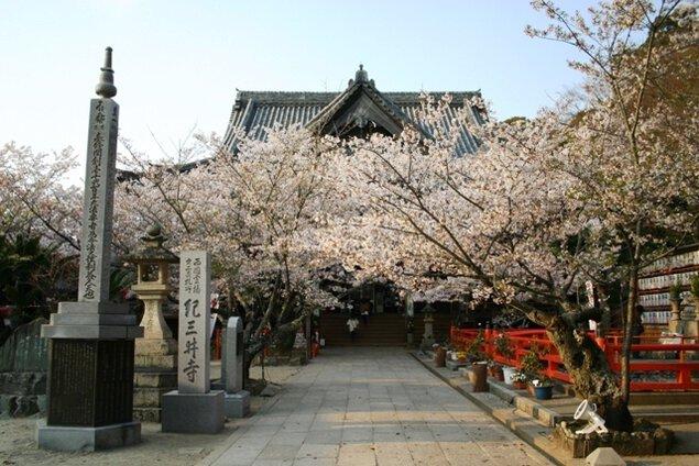 紀三井寺 桜まつり