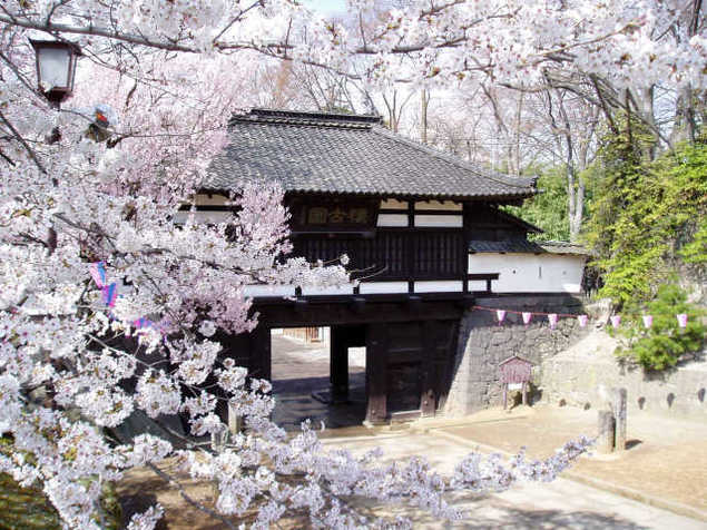 小諸城址懐古園 桜まつり<中止となりました>