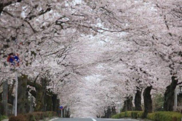 長瀞春の花物語2020~桜まつり~<中止となりました>