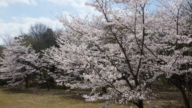 近江富士花緑公園 春まつり