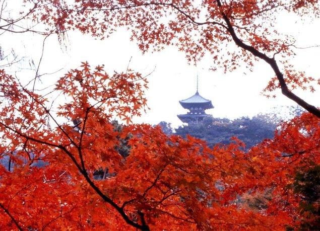 三溪園の紅葉