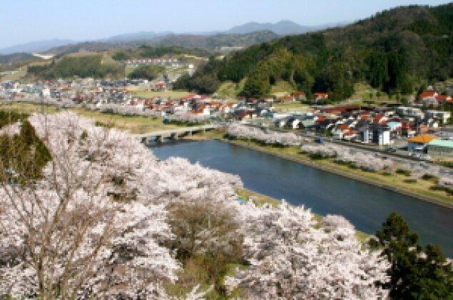 【桜・見ごろ】三刀屋川河川敷公園
