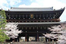 浄土宗 総本山知恩院の桜