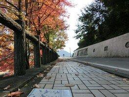 【紅葉・見ごろ】陶板の道