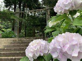 【あじさい・見ごろ】惣河内神社